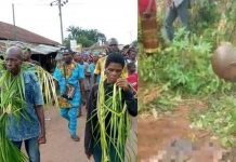 Family in Imo kills, buries 28-year-old son for being 'too stubborn'